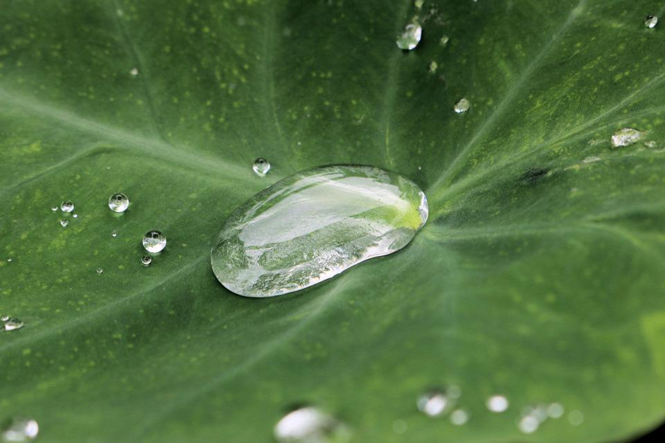 雨水が飲み水になるまで