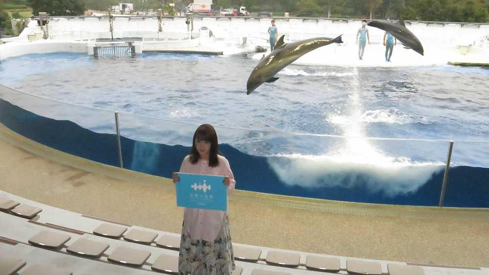 京都 水族館 イルカ